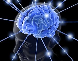cerveauglobal