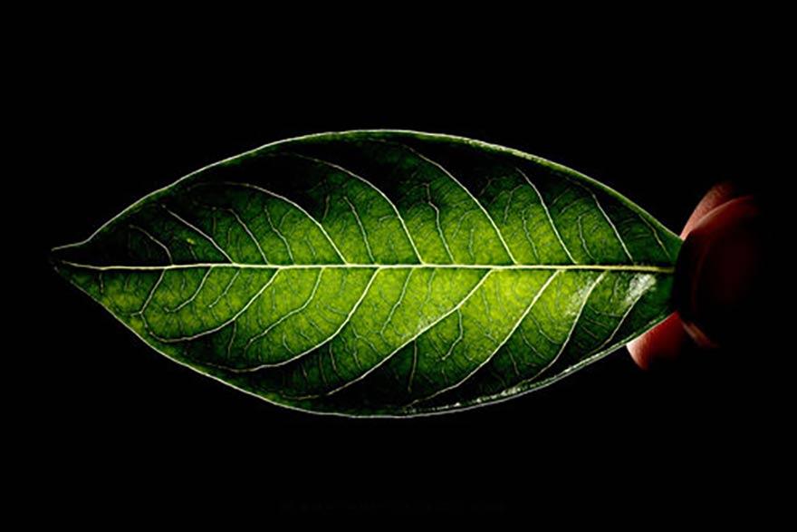Ecospirituality