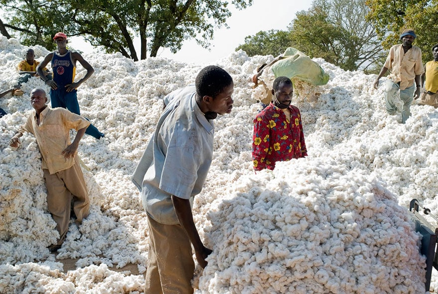 Cotton cultivation in Africa