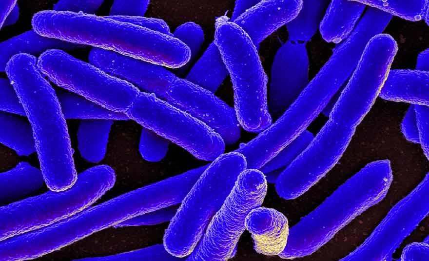 Super-bacteria