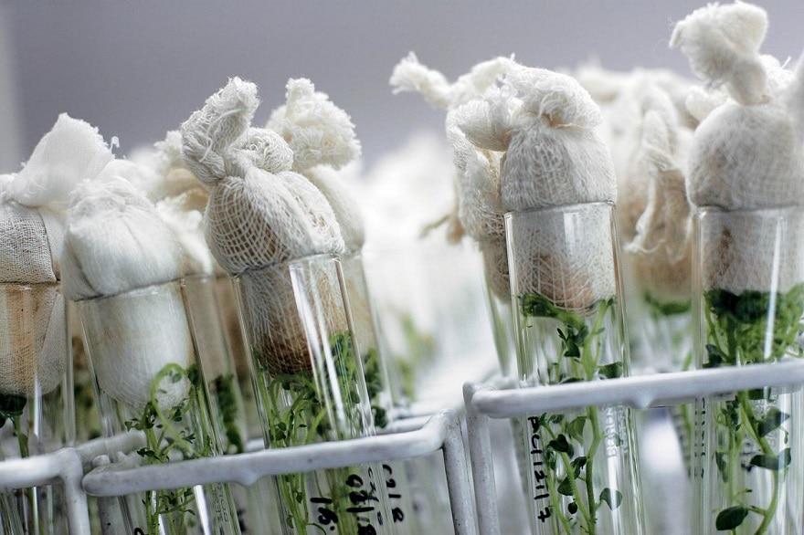 biotechnologies et OGM