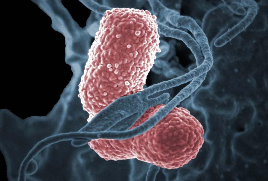 bactérie tueuse