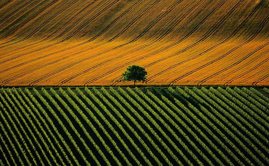 Terres agricoles Berry