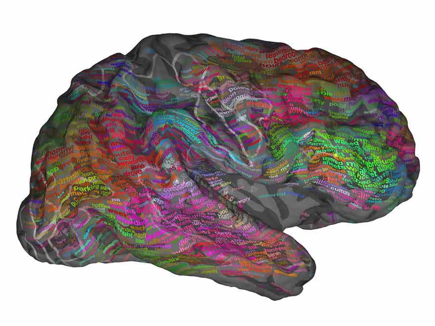 Cerveau et langage