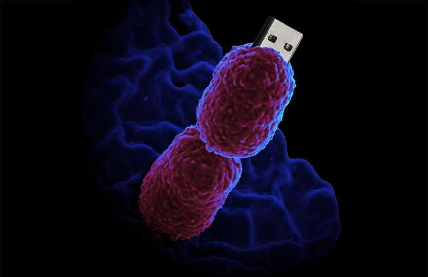 Bactérie disque dur