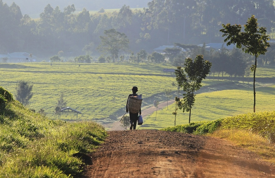 agriculture Afrique