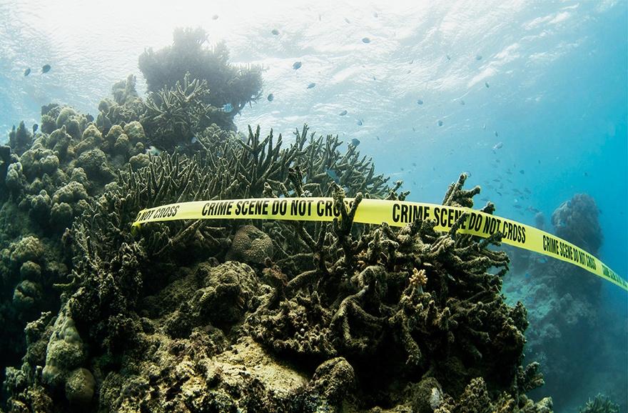 Blanchiement des coraux