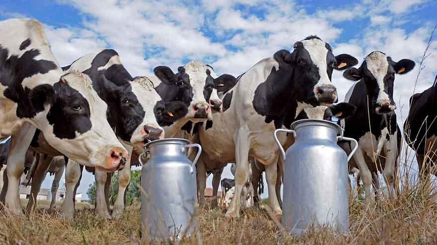 Cow-free milk