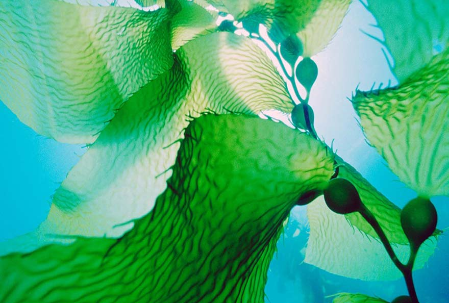 blue biotechnologies