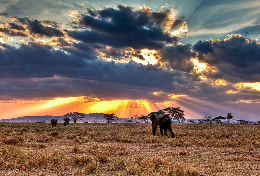 wild land biodiversity