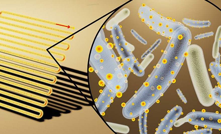 bactérie cyborg