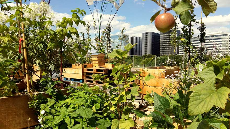 urban orchards
