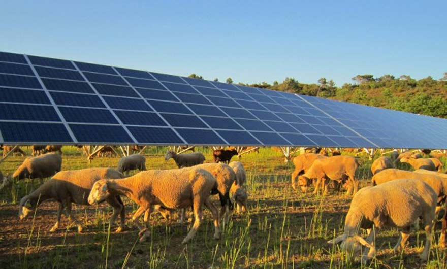 agriculture and renewable energies