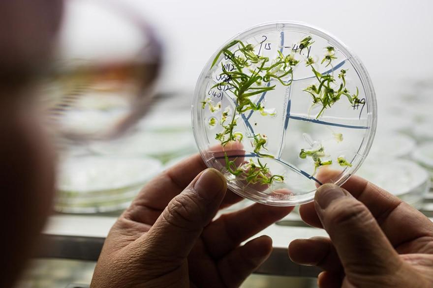 OGM CRISPR