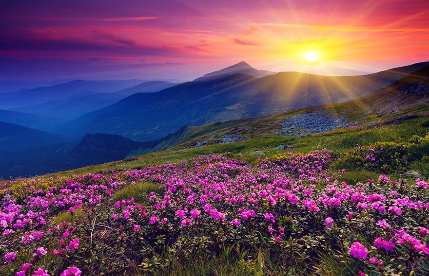 Plantes montagnes