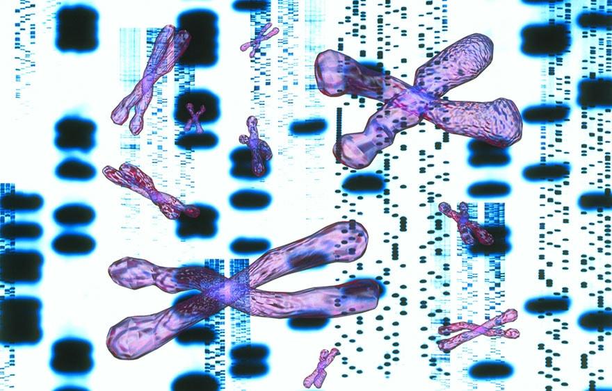 l&#039 genes;intelligence