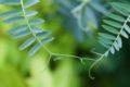 La révolution en cours de la biologie végétale bouleverse notre conception du vivant