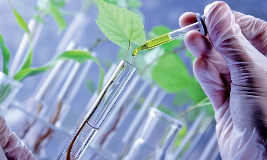 chimie du végétal