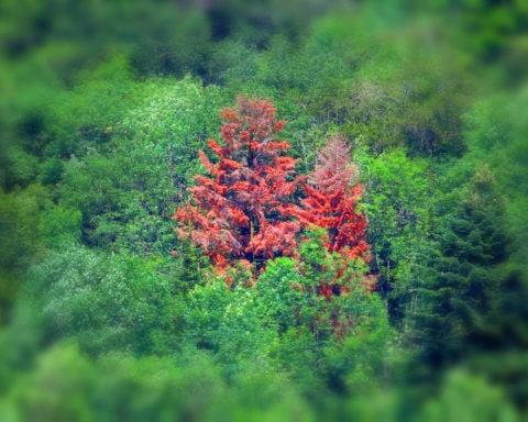 Nos forêts sont en danger d'extinction.