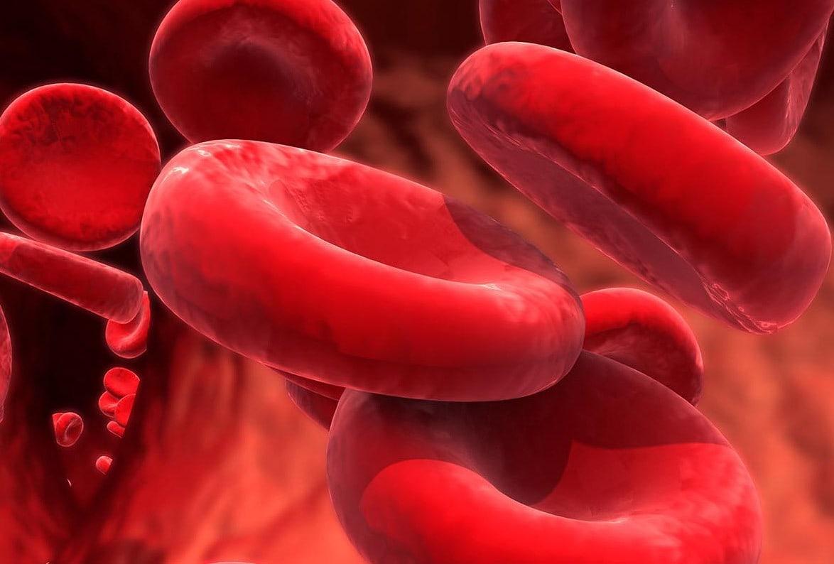 thérapie passive par anticorps