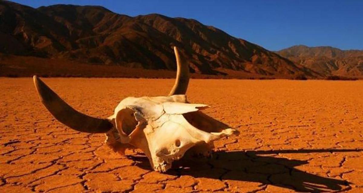 Les scientifiques observent une accélération imprévue des extinctions de masse
