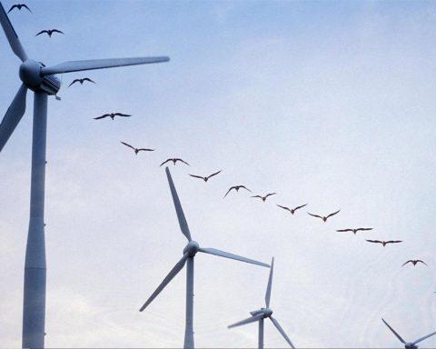 Une simple modification des éoliennes pourrait réduire de 70 % le nombre de mort d'oiseaux