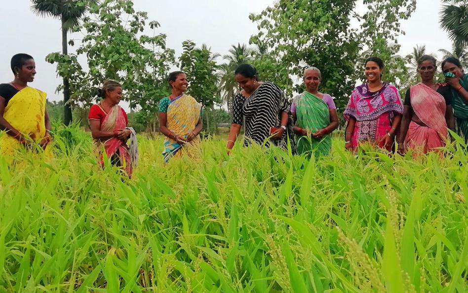 Pour lutter contre les dérèglements climatiques ces femmes indiennes réinventent une culture ancestrale