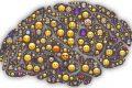 Les neurosciences apportent de nouvelles pistes pour comprendre l'origine de nos émotions
