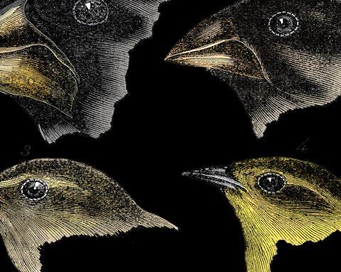 Poussés par la crise écologique, des espèces animales évoluent en à peine deux générations