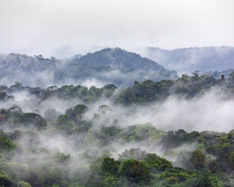L'Amazonie à un point de bascule : elle réchauffe l'atmosphère de la Terre au lieu de la refroidir