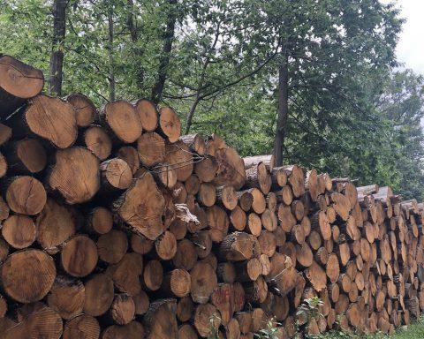 Massacre à la tronçonneuse : l'appel à cesser de brûler les forêts pour produire de l'énergie