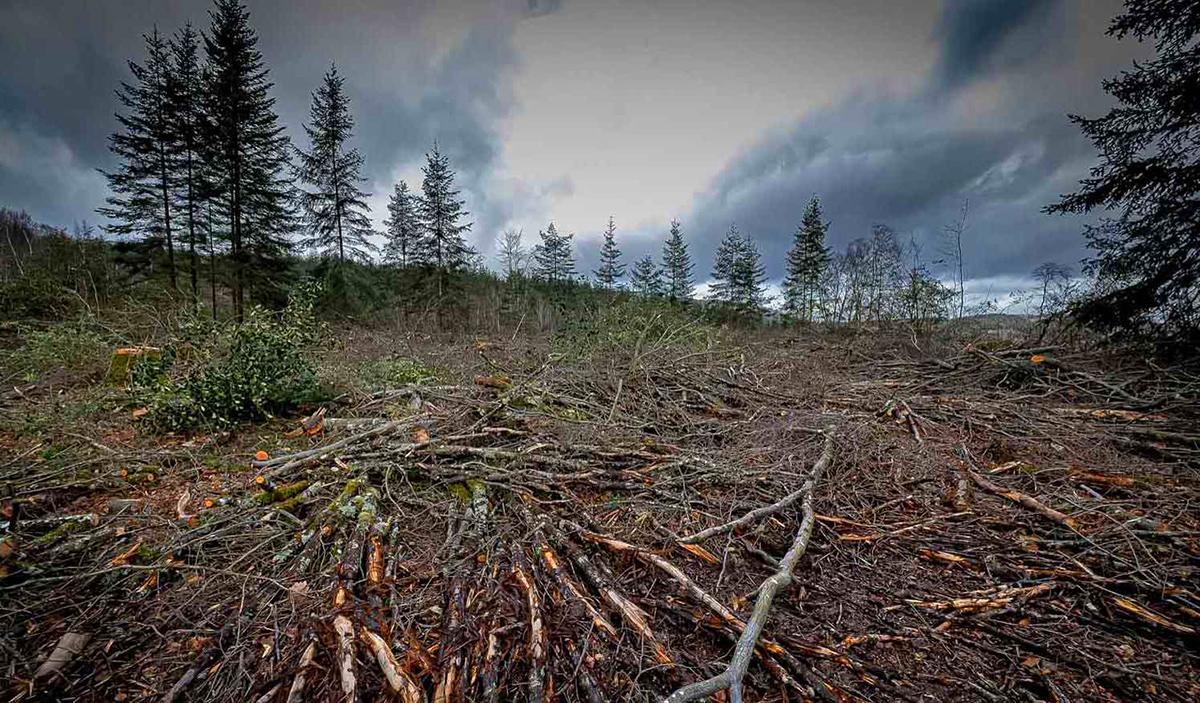 Entre calamité climatique et aberration écologico-politique, nos forêts sont en danger