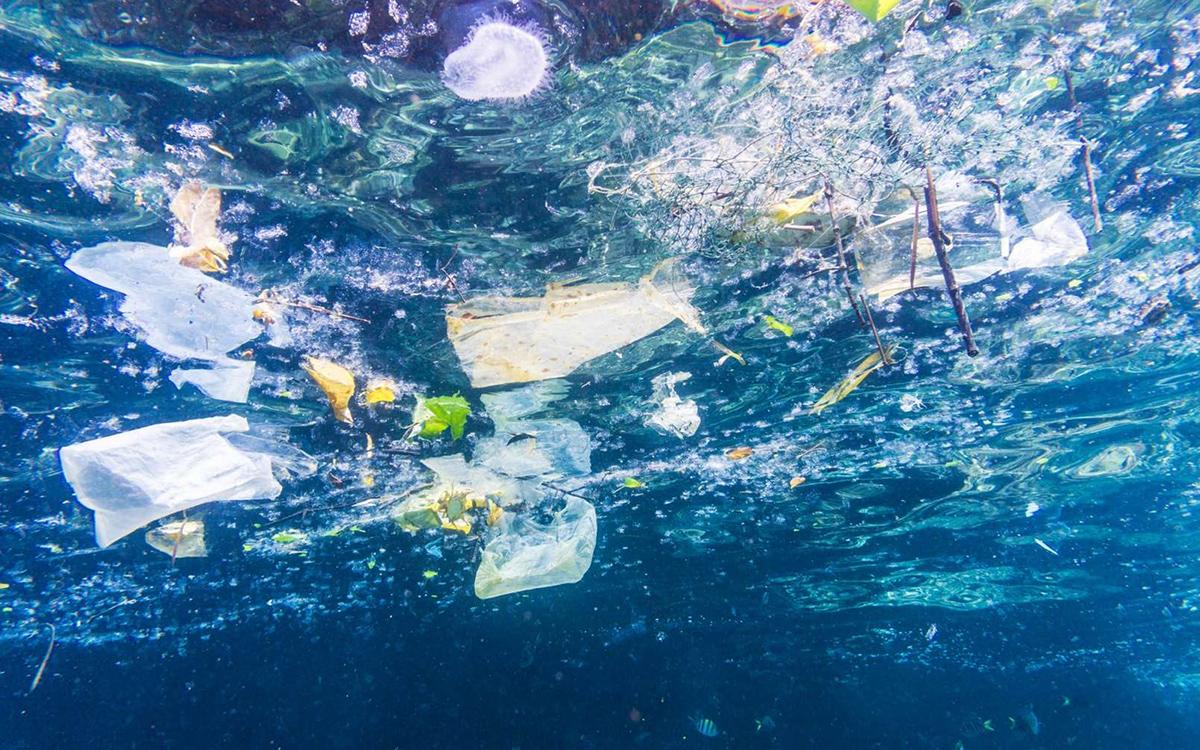 Ces scientifiques comptent utiliser des bactéries pour éliminer les microplastiques polluants