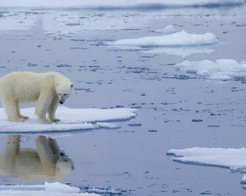 Cessons cette guerre insensée et suicidaire contre la nature