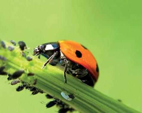 Des pesticides inspirés de la nature, sans poison chimique : c'est possible.