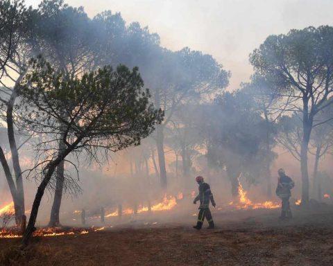 Les feux sont un désastre pour la faune sauvage
