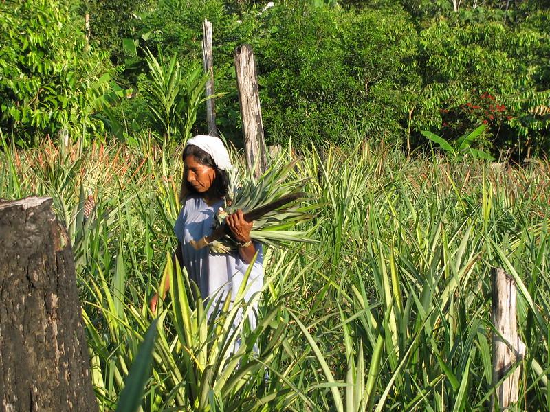 L'extinction des langues indigènes conduit à une perte irréparable de connaissances sur les plantes médicinales