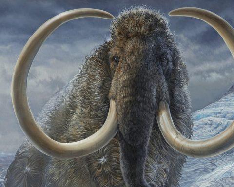 Retour des mammouths, et pourquoi pas des dinosaures ?