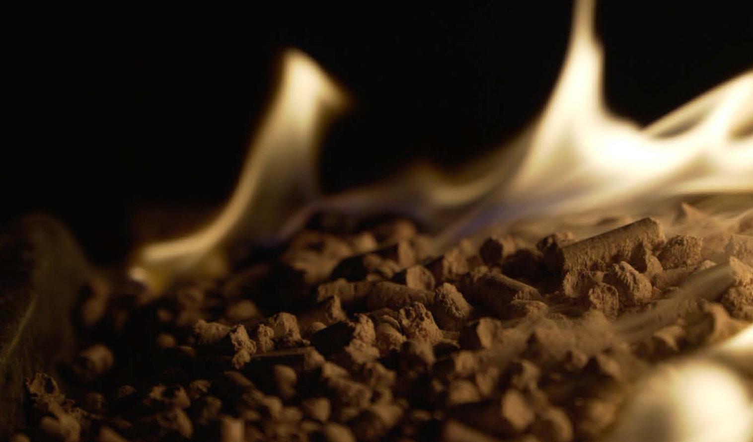 Faut-il brûler des forêts pour produire de l'énergie ?