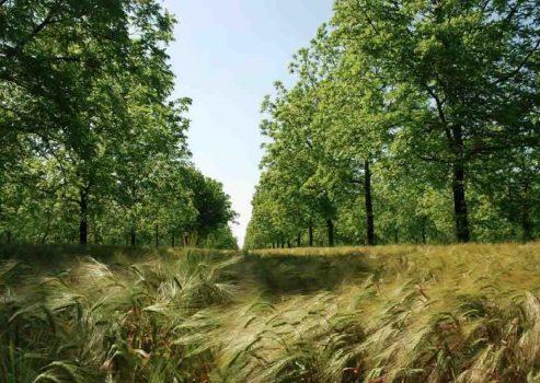 agroecologie-gene