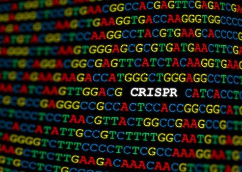 Des députés écolos allemands encouragent CRISPR et le génie génétique en agriculture